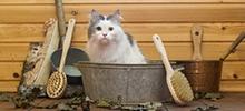 Renforcer l'hygiène d'un chat avec une maison de toilette pour chat adaptée….