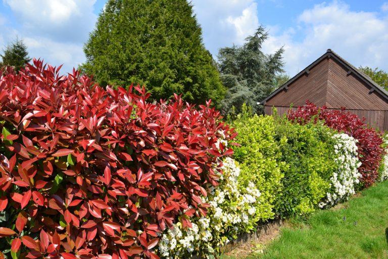 La haie de jardin en complément de votre clôture